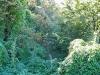 giochi di luce nel bosco fitto