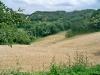 campi di grano bio