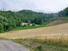 attraverso i campi di grano
