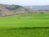 campi di erba medica