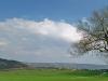 albero guardiano della valle