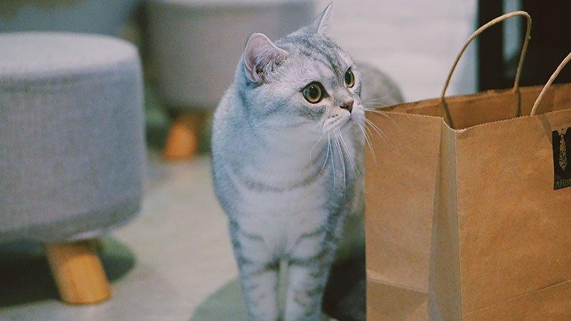 gatti durante il trasloco