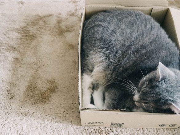 gatto dorme nella scatola