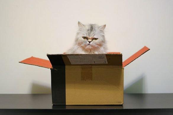gatto nella scatola da trasloco