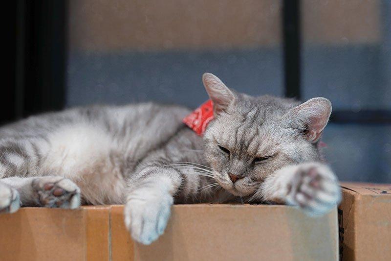 gatto dorme sulla scatola