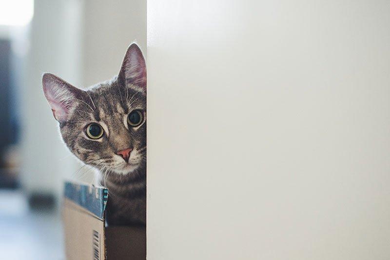 gatto spia il trasloco