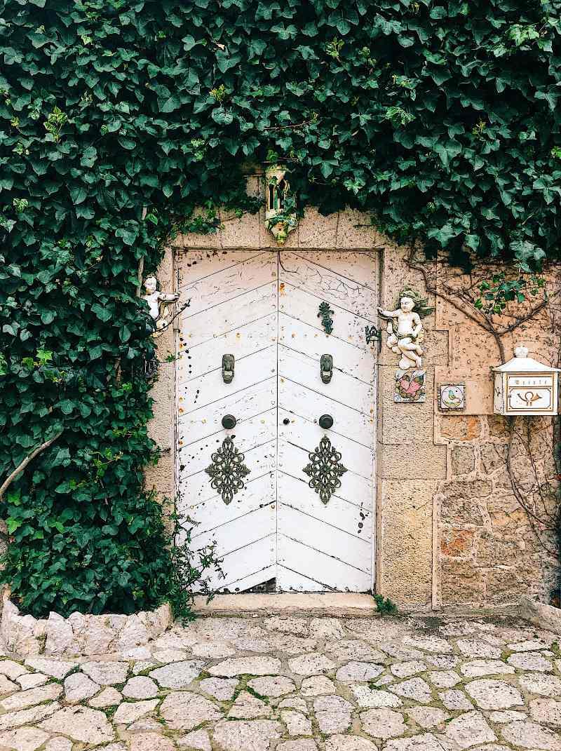 magnifica edera a copertura di un muro