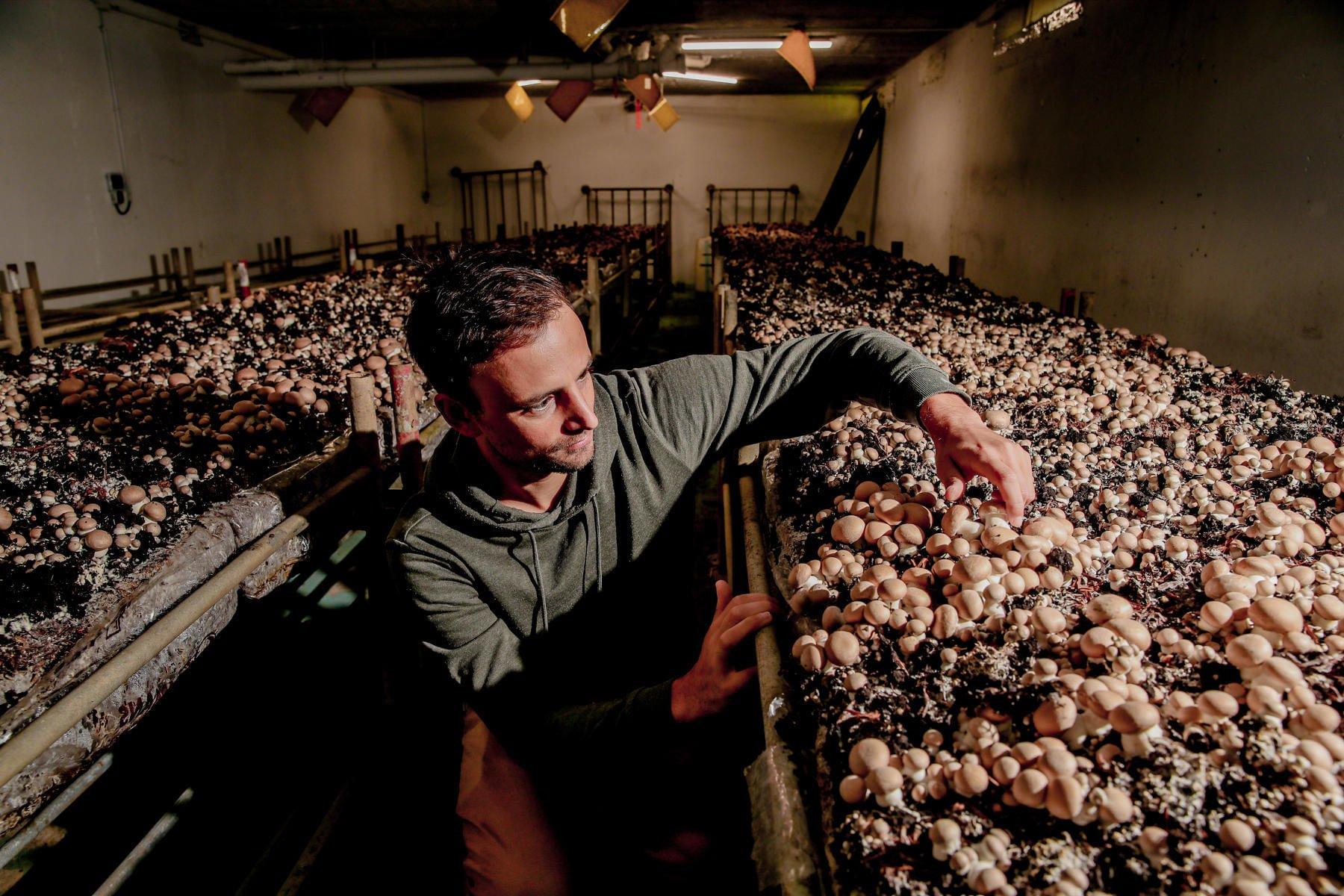 Cycloponics, coltivazione di funghi negli ex garage di P