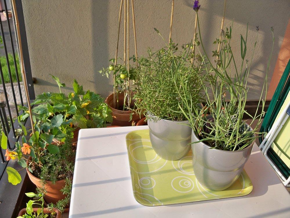 rosmarino e lavanda orto sul balcone