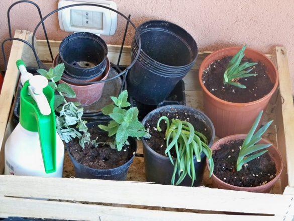 vasi per orto sul balcone
