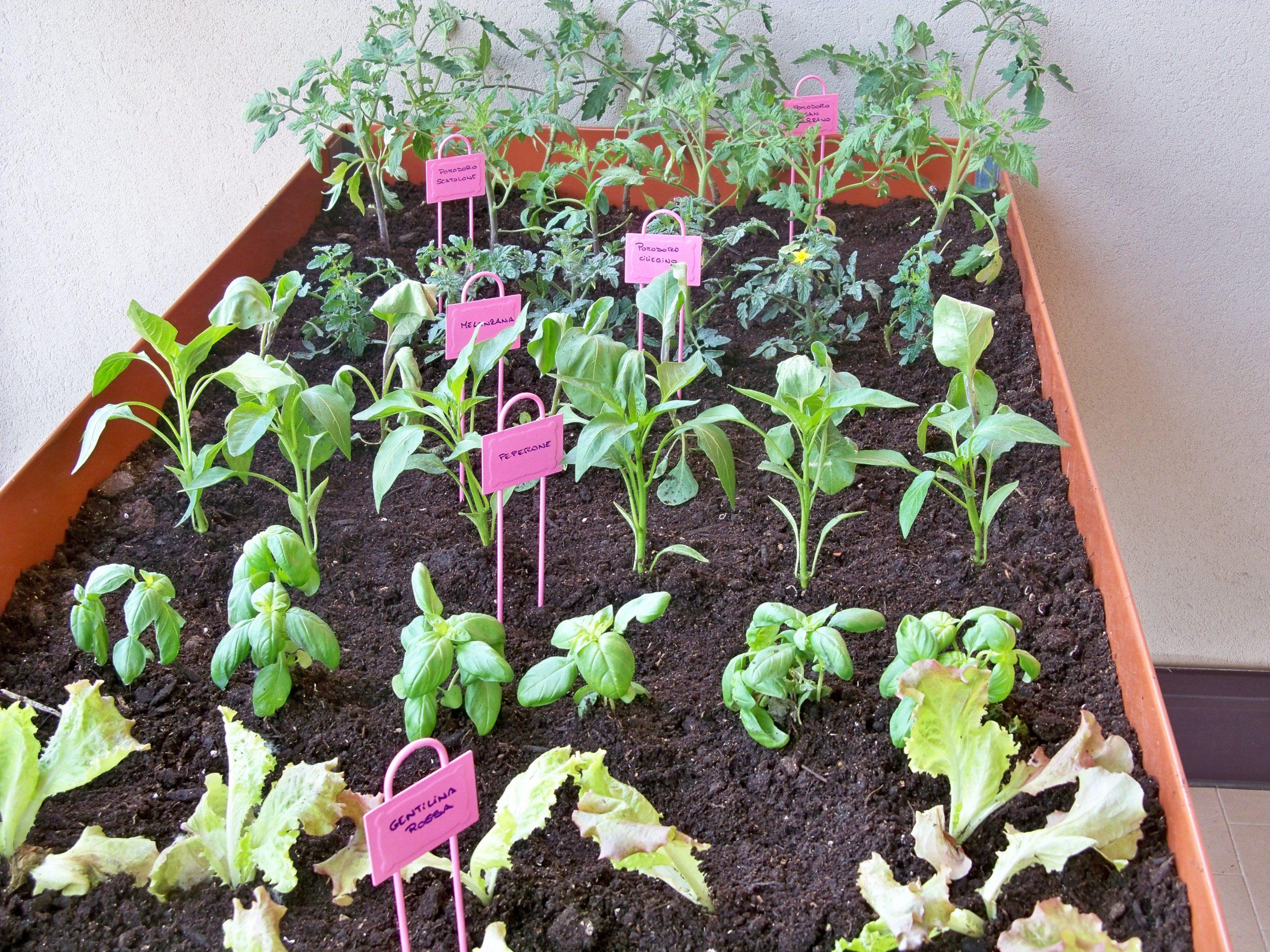 Ortoterapia e orto sul balcone: insalate, basilico, peperoni, peperoncini, pomodori