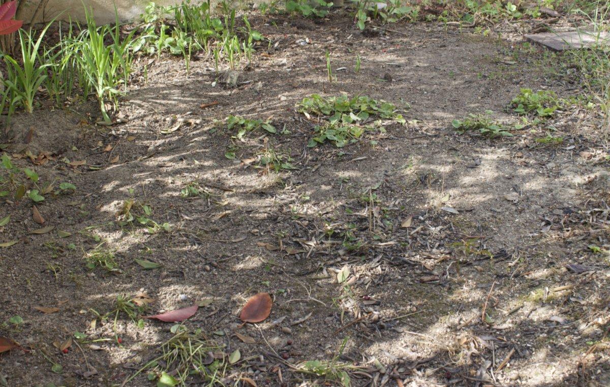 aree secche nell'orto giardino