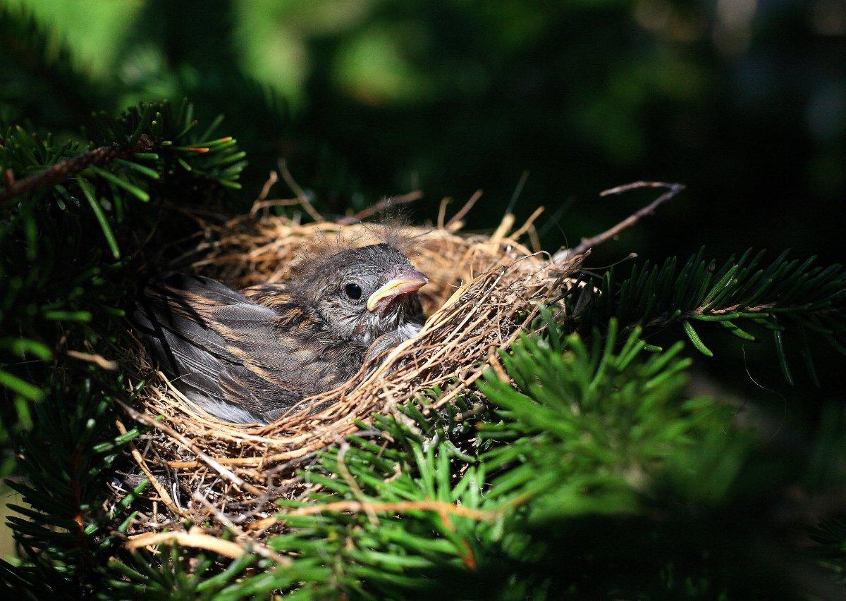 nido con uccellino, casa piccola