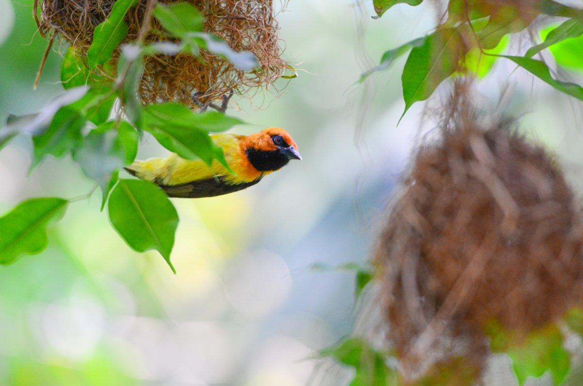 nidi con uccello multicolore
