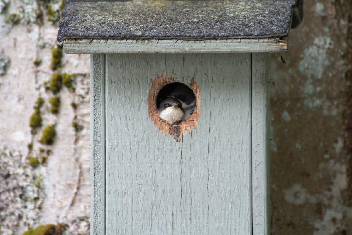 piccola casetta per uccelli