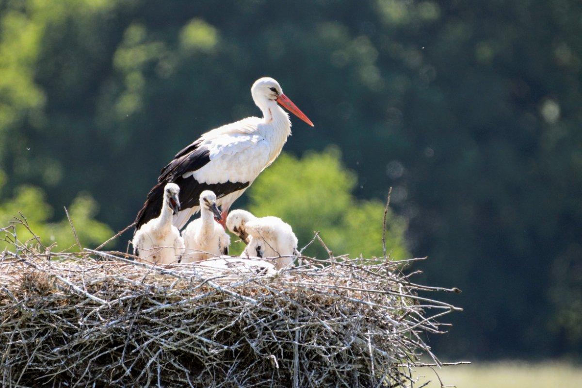 nido di cicogna, casa piccola per la covata