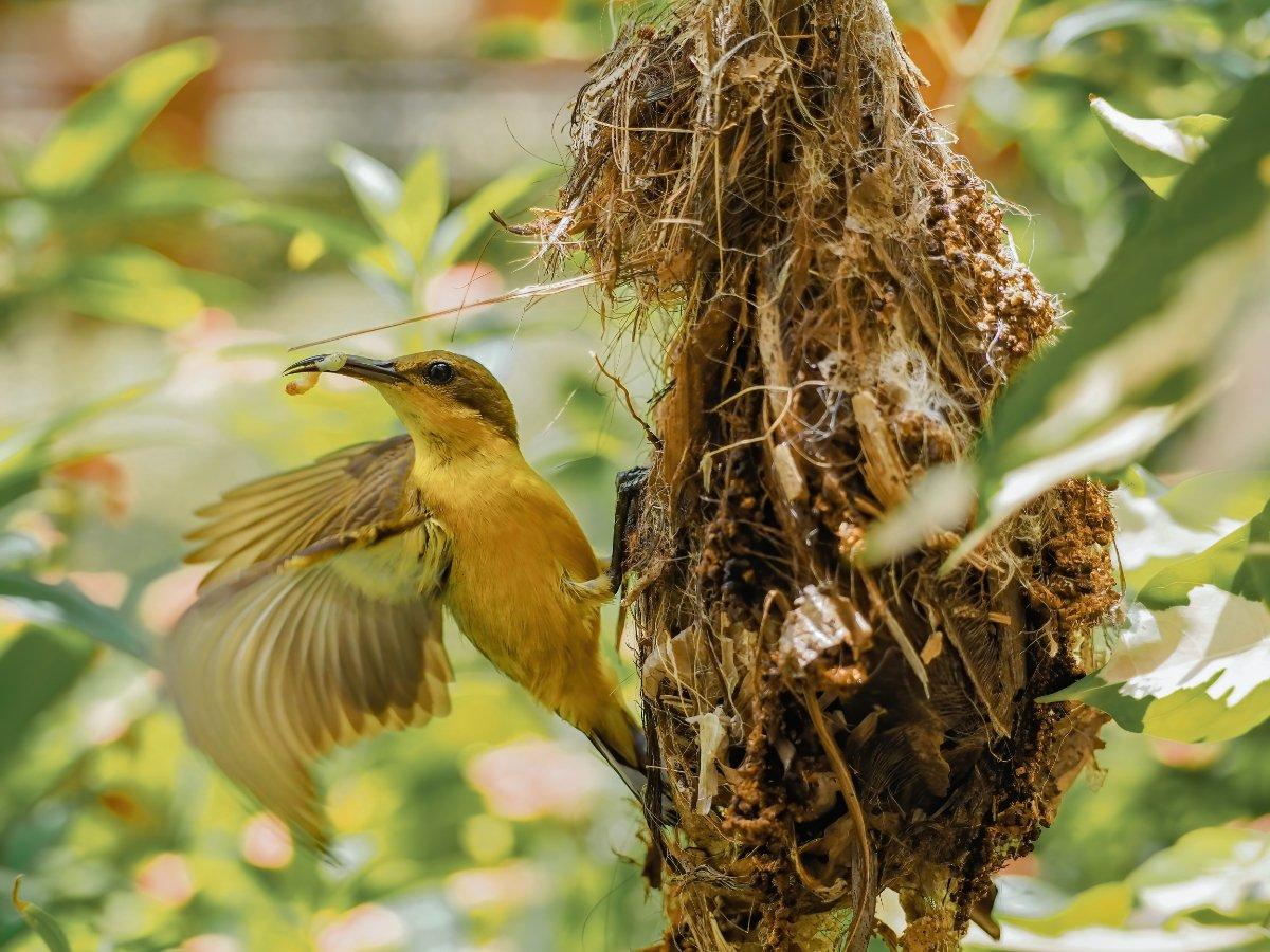nido su un albero, piccola casa
