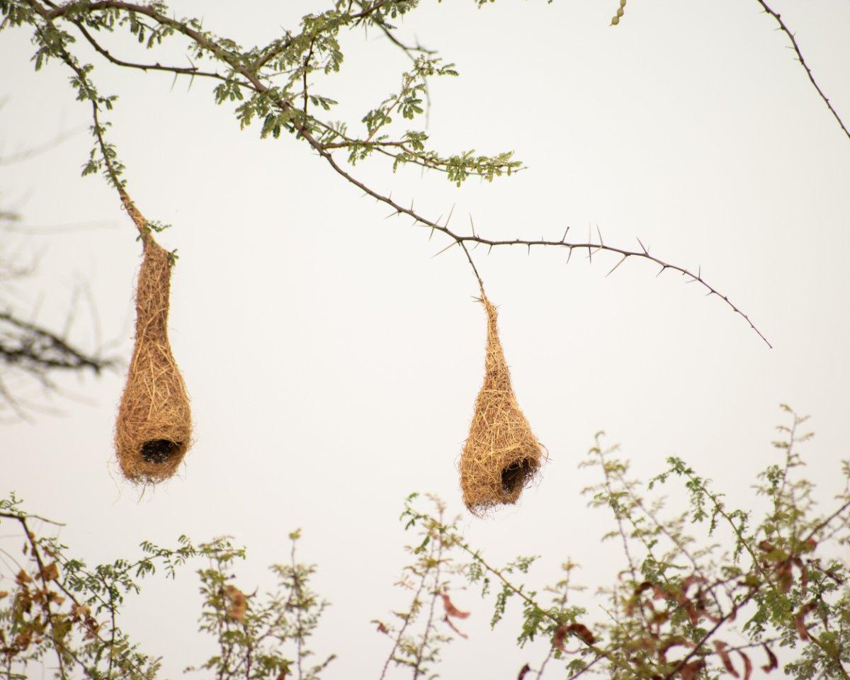 casa piccola, nidi di uccelli