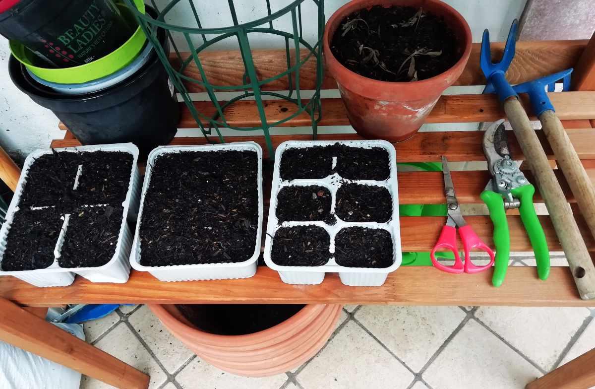 Orto: seminiere insalate