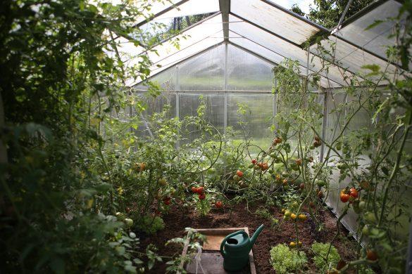 serra con pomodori, autoproduzione