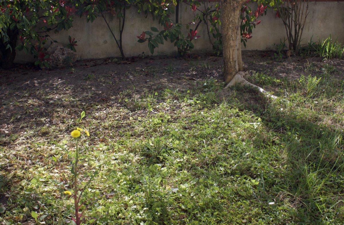il terreno nell'orto giardino
