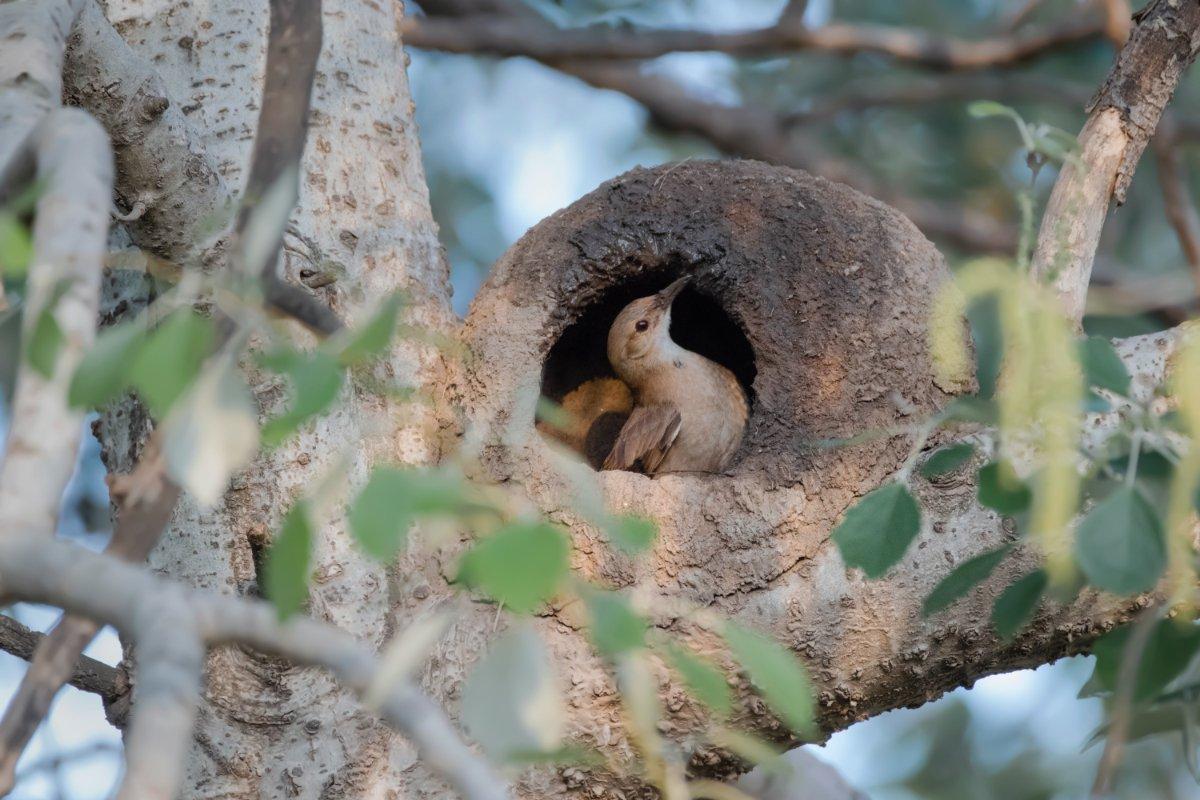piccola casa, piccolo nido con cuccellino