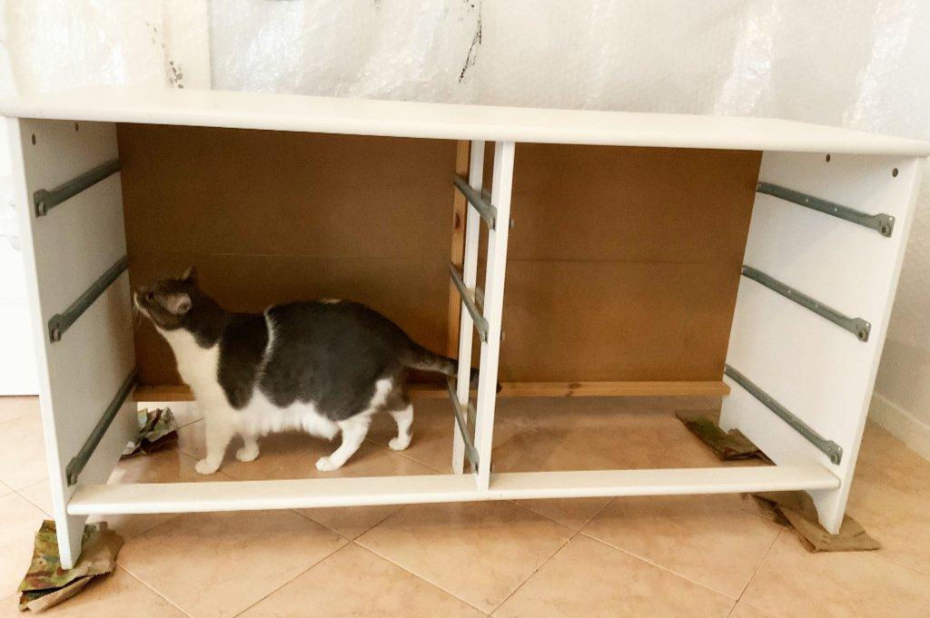 restauro cassettiera: tolti i cassetti, Koi fa la sua ispezione